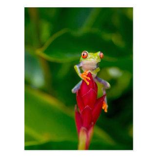 Postal rana arbórea del Rojo-ojo, Costa Rica
