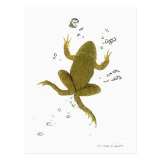Postal rana verde común