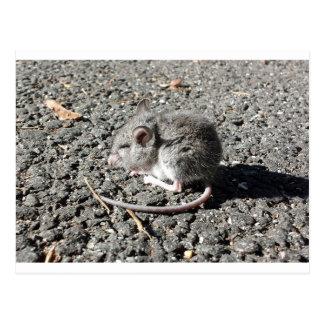 Postal Ratón del bebé