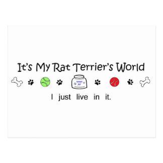 Postal RatTerrier