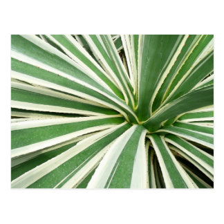 Postal Raya verde y blanca de la planta del agavo