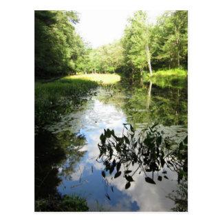Postal Reflexiones del pantano