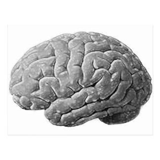 Postal Regalos del cerebro