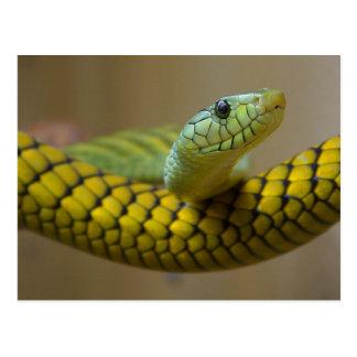 Postal Reptil de la serpiente