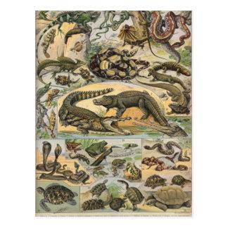 Postal Reptiles
