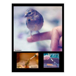 Postal rescatada de la historia del Goldfinch