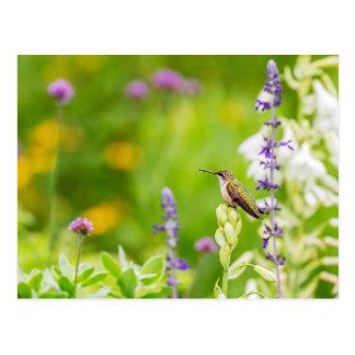 Postal Resto del colibrí