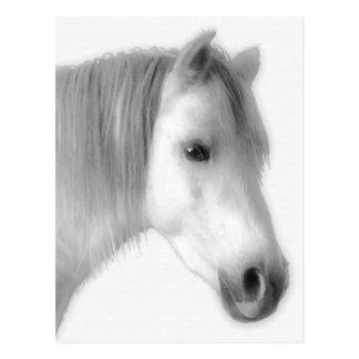 Postal Retrato árabe blanco del caballo