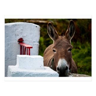 Postal Retrato de un burro en Irlanda