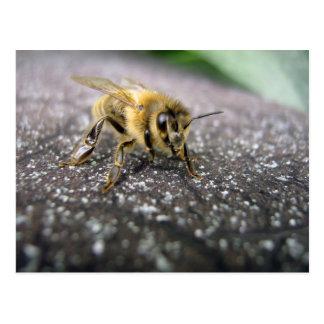 Postal Retrato de una abeja de la miel