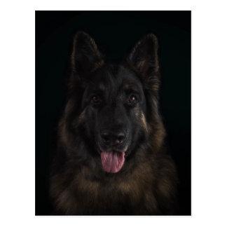 Postal Retrato del perro de pastor alemán