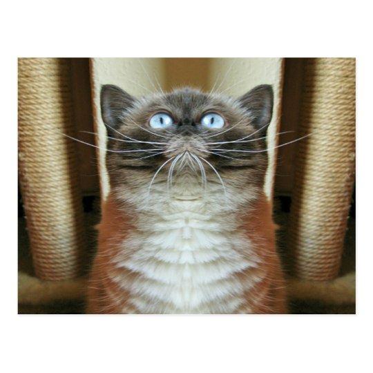 Postal Retrato divertido del gato de ojos azules