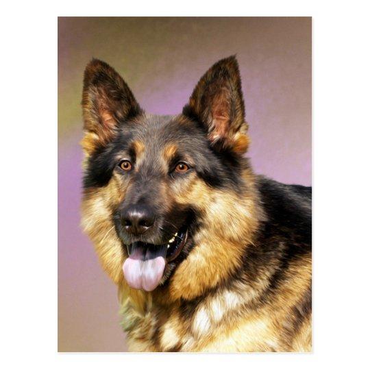 Postal Retrato hermoso del perro de pastor alemán