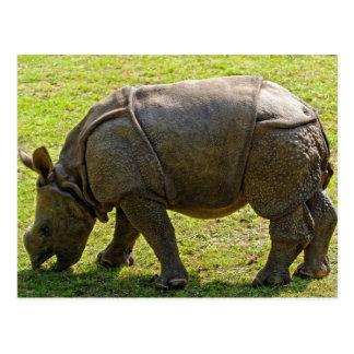 Postal Rinoceronte del bebé