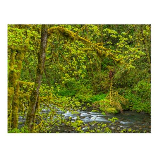 Postal Rocas y línea de árboles cubiertas de musgo Eagle