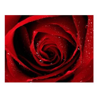 Postal Rocío floral de los flores de los pétalos color de