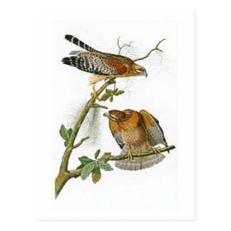 Postal Rojo-llevó a hombros los pájaros de Juan Audubon