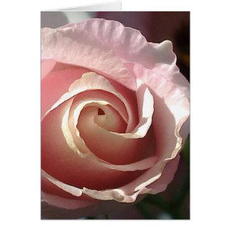 Postal rosa apuesta rosa