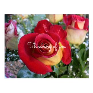 Postal Rosa rojo que piensa en usted mensaje de encargo