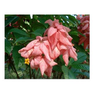 Postal rosada y amarilla de Fiji de la flor