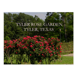 Postal Rosaleda de Tyler