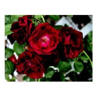 Postal Rosas 2