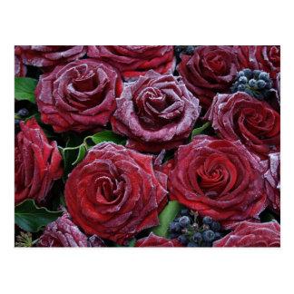 Postal Rosas congelados