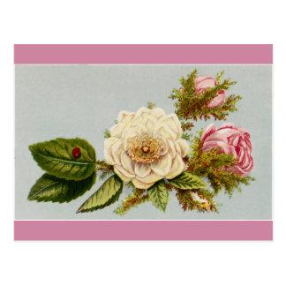 Postal - rosas de la mariquita