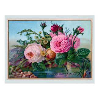 Postal Rosas hermosos a lo largo del saludo del agua
