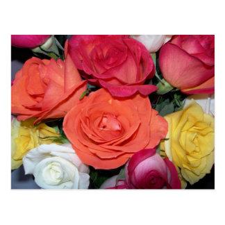 Postal Rosas múltiples