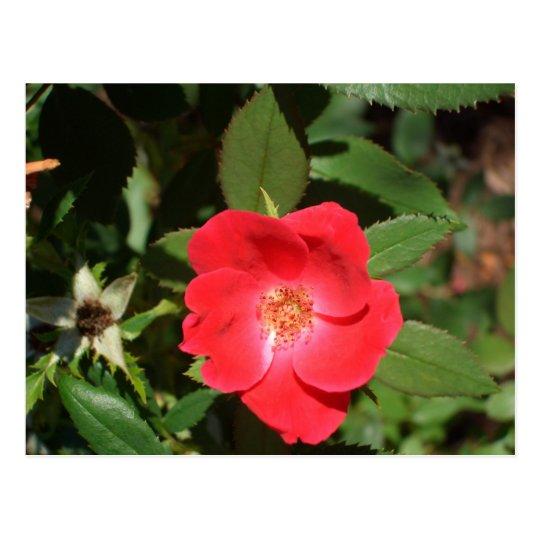 Postal Rosas rojos y magnolias de Georgia por el