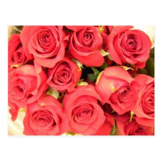 Postal rosas rosados