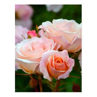 Postal Rosas rosados elegantes
