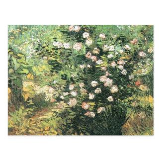 Postal Rosebush de florecimiento de Vincent van Gogh