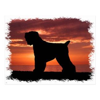 Postal Ruso negro Terrier