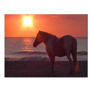 Postal Salida del sol del caballo