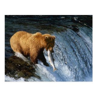 Postal Salmones de cogida de Alaska del oso de Brown en