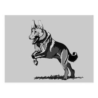 Postal Salta perro pastor