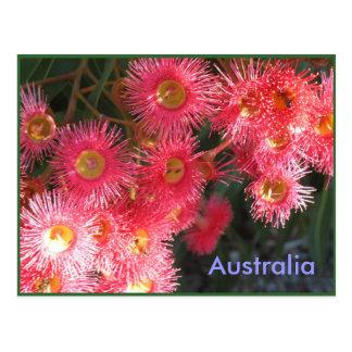 Postal Saludos de Australia