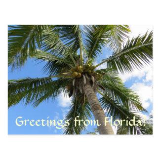 Postal Saludos de la palmera de la Florida/del coco