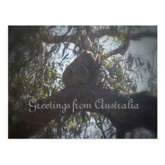 Postal Saludos del oso de koala de Australia