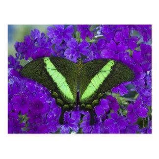 Postal Sammamish, mariposa tropical 4 de Washington