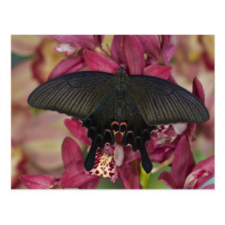 Postal Sammamish, mariposa tropical 8 de Washington