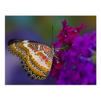 Postal Sammamish, Washington. Mariposas tropicales 64