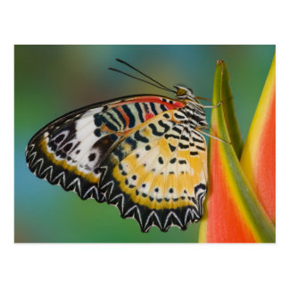 Postal Sammamish, Washington. Mariposas tropicales 67