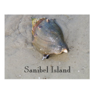 Postal Sanibel Shell