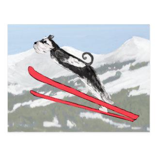 Postal ¡Schnauzer en los esquís!