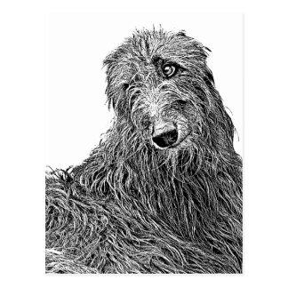 Postal Scottish deerhound Blanco y Negro