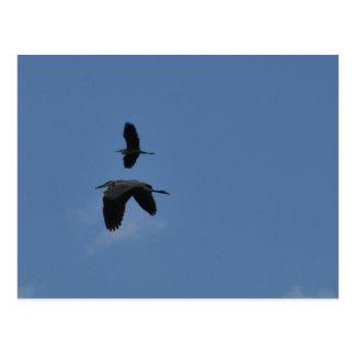 Postal Sea fuerte - los Egrets en vuelo