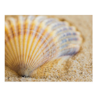 Postal Seashell dulce